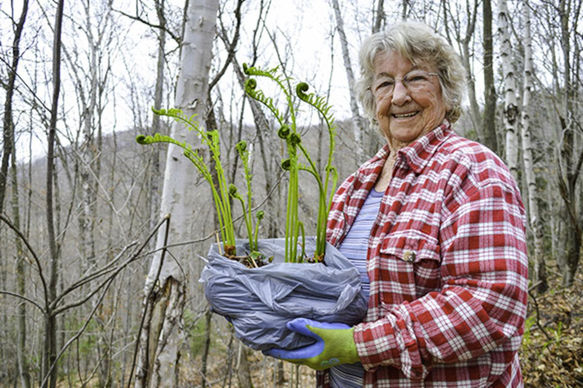 volunteer carrying plant