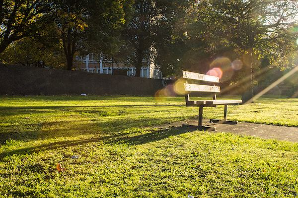 Empty bench on the grass with sun shining.